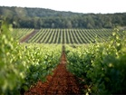 Istrian peninsula is rich in wineyards