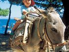 Visit Korcula Island and take a ride on a donkey